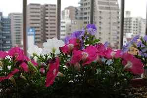 大都会の小さな花