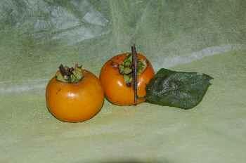 諏訪の柿 1