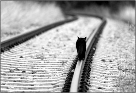 ネコ日記「旅路」