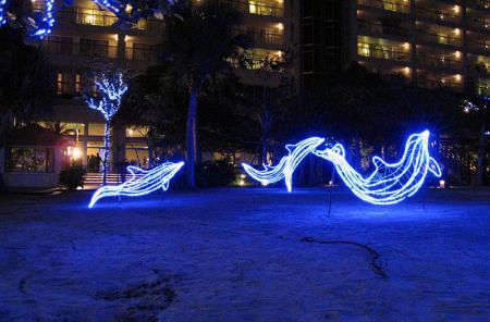 タイトル:砂上のイルカ