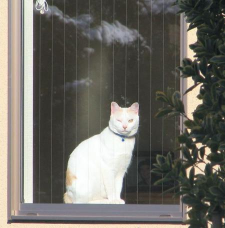 タイトル:飾り窓の女