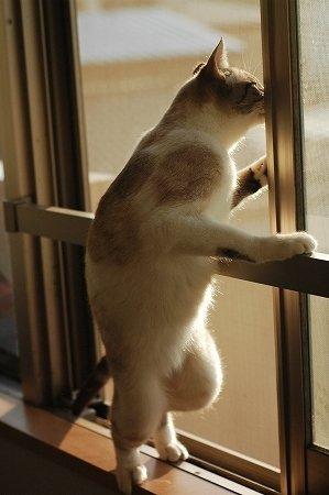 タイトル:窓を開けてっと、(nya)