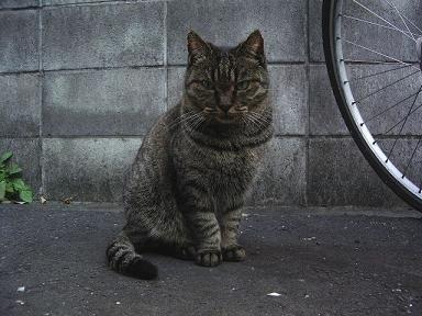 051124kiji4.jpg