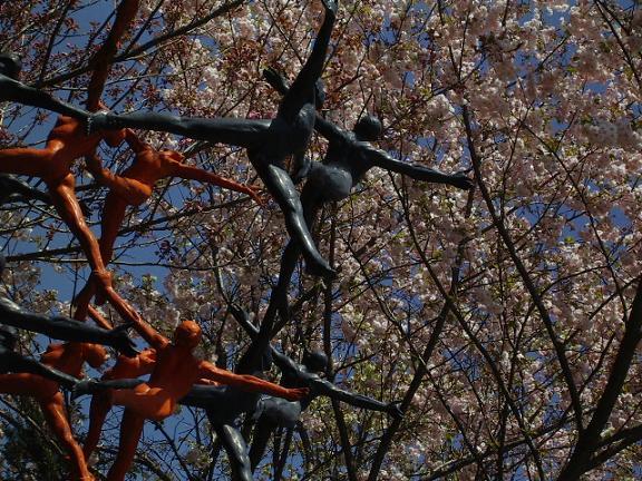 sakuradance.jpg
