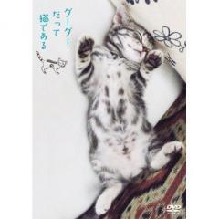 グーグーだって猫である ニャンダフル・ディスク付き(初回限定特別版) [DVD]