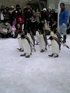 旭山動物園23