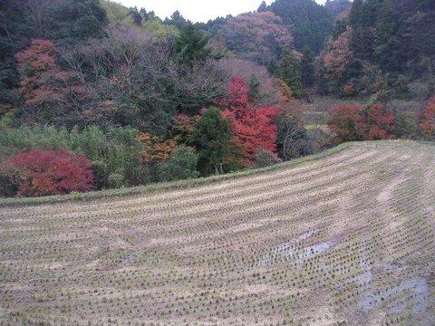 kamogawa061205
