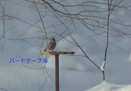 DSC03081.jpg