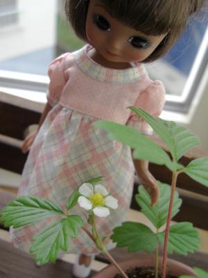 やぁ、かわいいお花