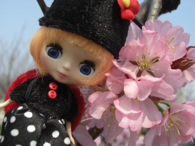 桜も咲いたよ。