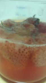 イチゴ酵母4日目アップ