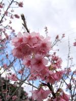 桜0114