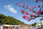 桜祭り広場