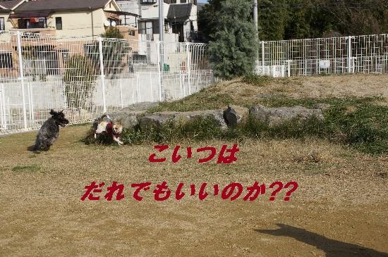 051_20091221140613.jpg