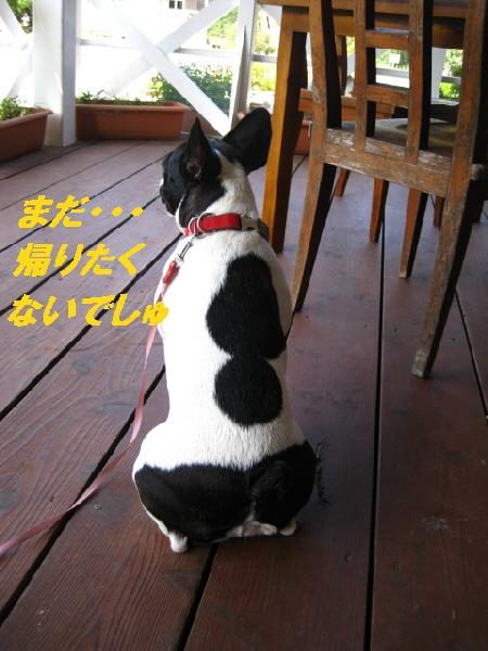 10_20090930222120.jpg