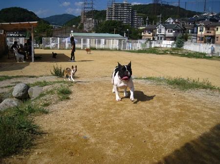 11_20091006193509.jpg