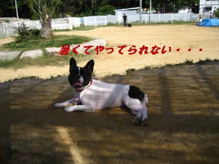 12_20091006193420.jpg