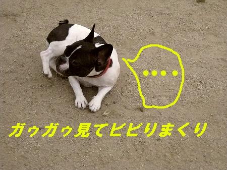 7_20090927113306.jpg