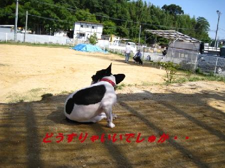 7_20091006193419.jpg