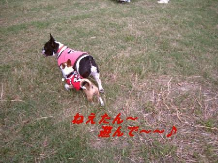 8_20091014192935.jpg
