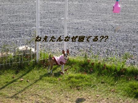 9_20091006193511.jpg