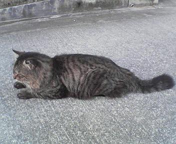 野良猫みい