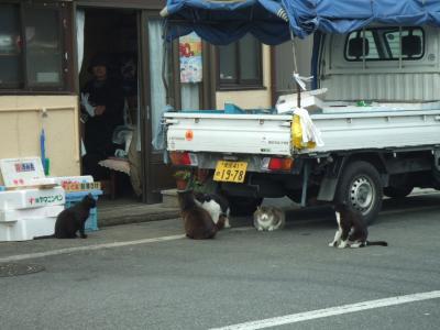 デブ猫ちゃんたち
