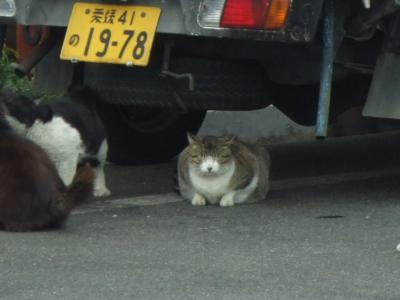 デブ猫ちゃん