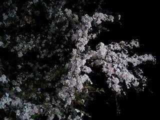 モ~モ~リラちゃんが行く2-15
