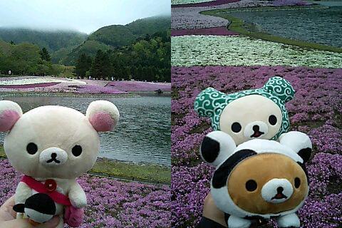芝桜祭り-3