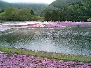 芝桜祭り-4