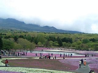芝桜祭り-6