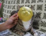 猫 にゃーにゃ 仮面 -2-