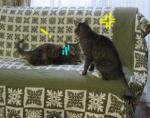 猫 にゃーにゃ 不機嫌 ストレス発散
