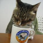 猫 にゃーにゃ マグで水を飲む