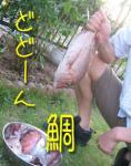 釣り めで鯛?!