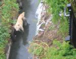 迷子犬 用水路でみつける
