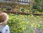 お庭 落ち葉拾い