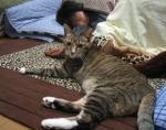 猫のにゃーにゃ コタツで寝入るおちび
