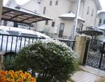 2006 12/29 雪