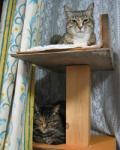2匹の猫たち