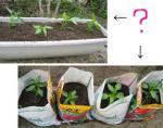 野菜の苗と 土