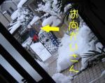 お向かいさんと雪かきw