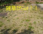 雑草だらけの 芝生