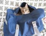 猫のにゃーにゃ  鞄から