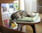 猫のにゃーにゃ 昼寝中