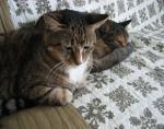 「悩みはあるんです・・・」 唐突に話しかける猫のにゃーにゃ