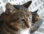 「もっと、そばに寄って下さい」 小声で話す猫のにゃーにゃ