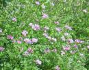 「下にはレンゲたんぽぽの花盛り。・・」落語『愛宕山』より れ
