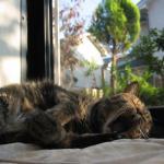 猫 びー お昼寝する?